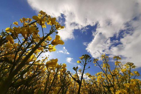 zółte kwiaty